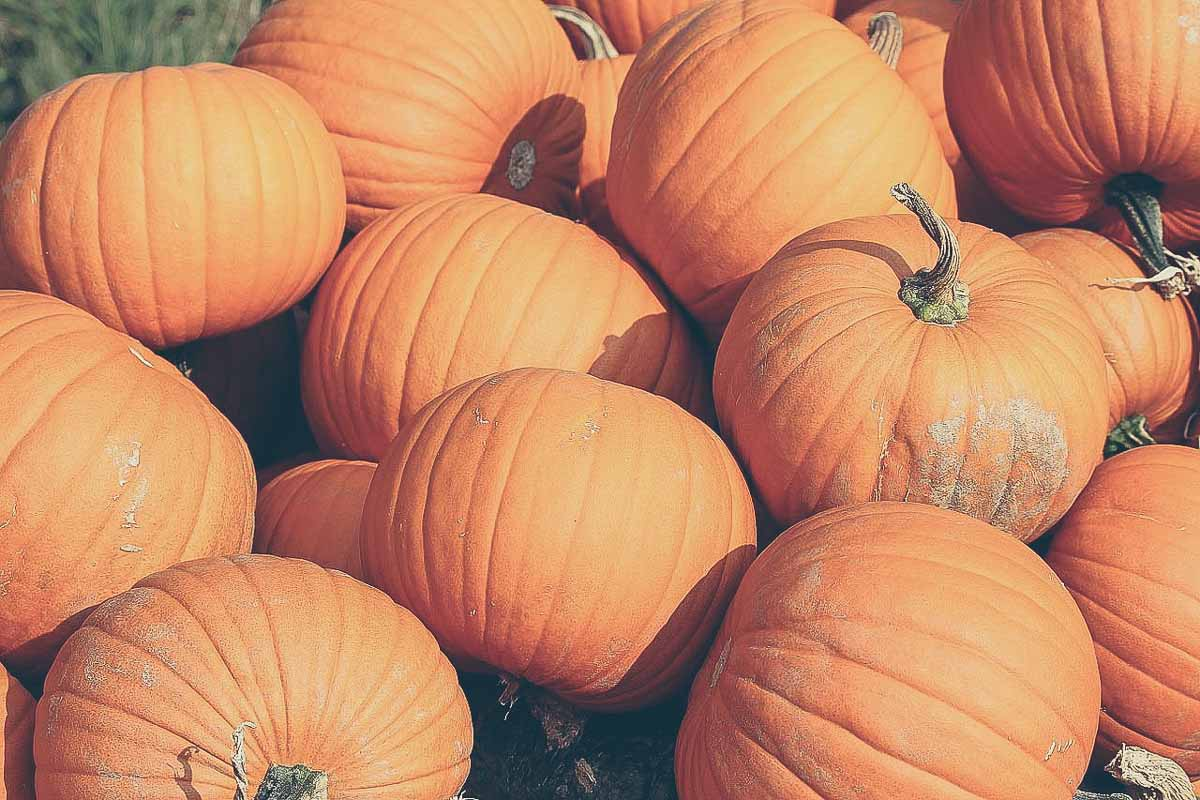 Disfraz barato Halloween-11