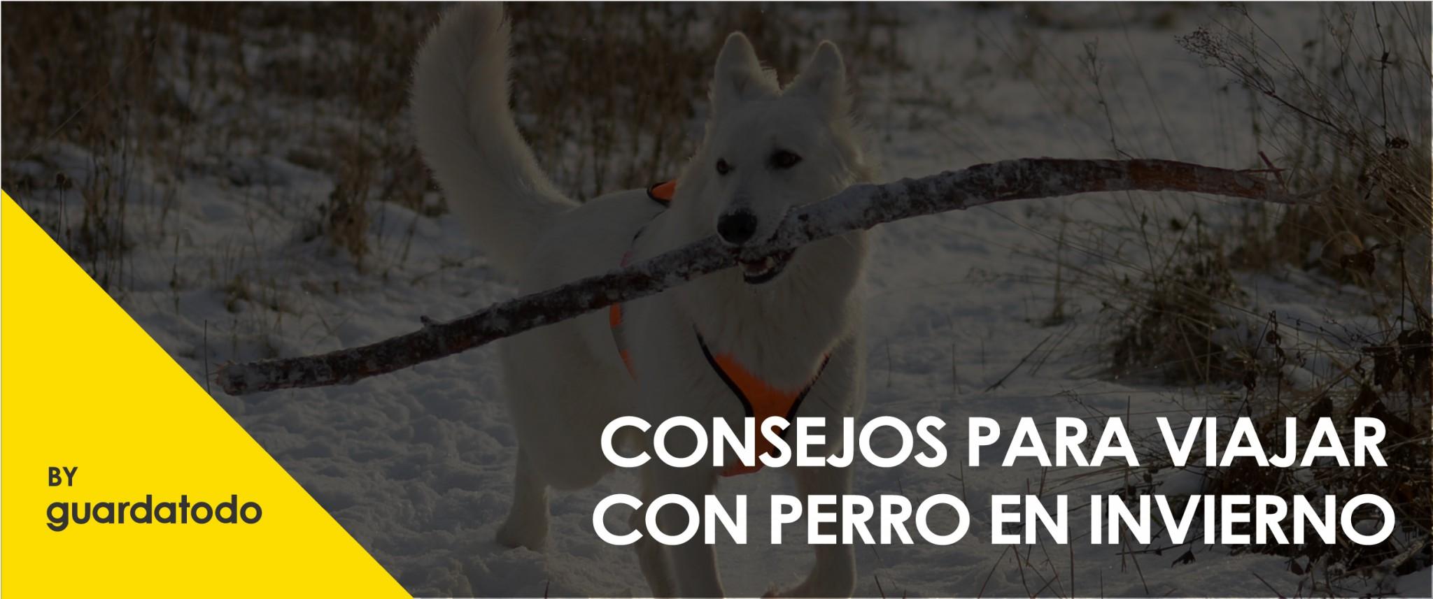CONSEJOS PARA VIAJAR CON PERRO EN INVIERNO-01